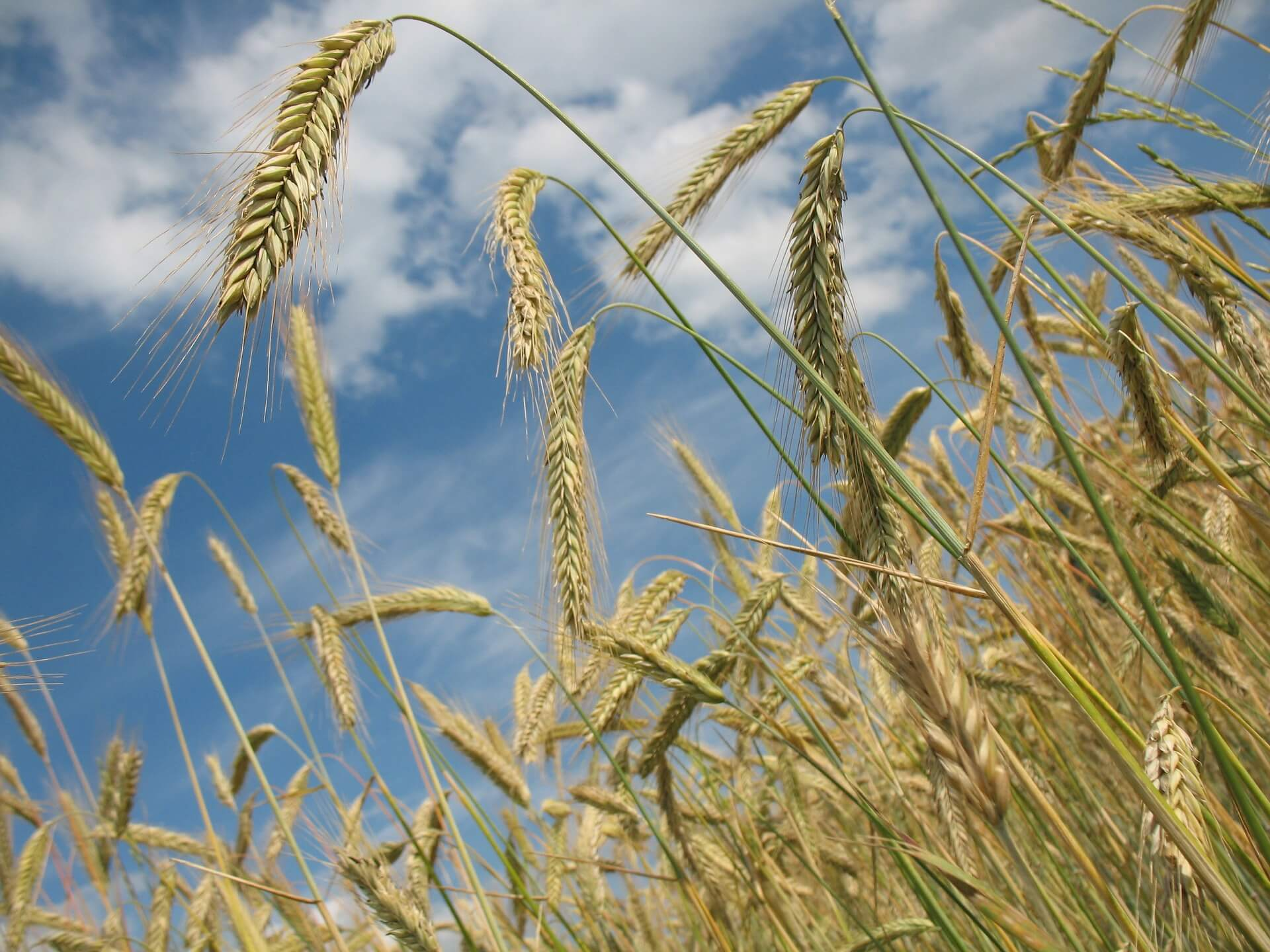 Which Grain Deserves A Spot In Your Survival Stockpile?